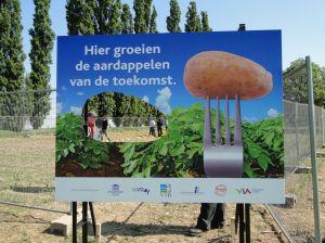 hier groeien de aardappelen van de toekomst